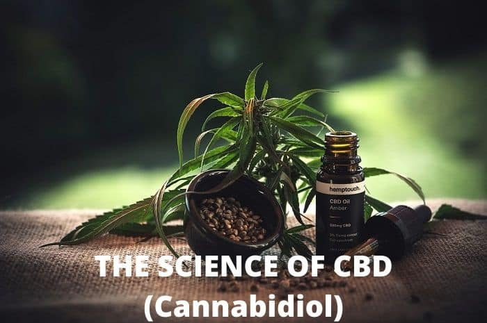 CBD oil for pain relief